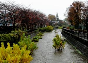 増水した黒目川