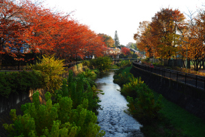 紅葉の黒目川