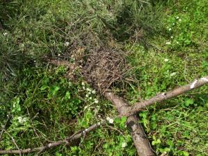 破壊されたツミの巣
