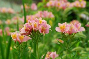 にぎやかな花