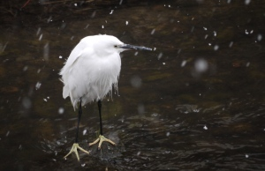 黒目川の雪