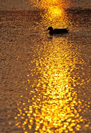 夕焼けの水面