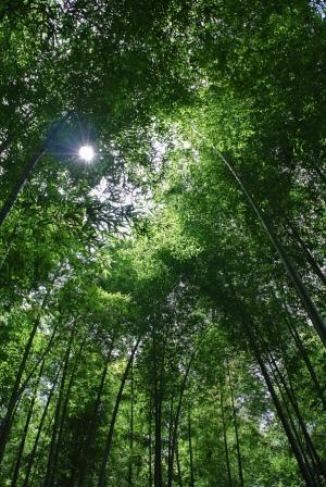 春の竹林公園