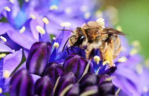 「星のソナタ」と蜂