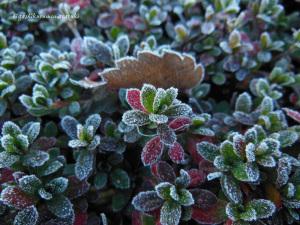 川霧の氷結