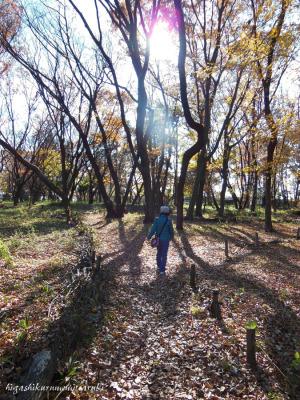 初冬の武蔵野