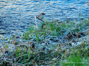 早朝の黒目川