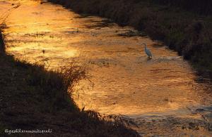 夕日に染まる黒目川
