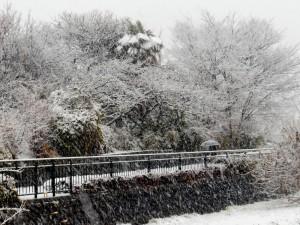 雪の黒目川