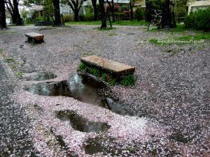 桜散る雨の遊歩道