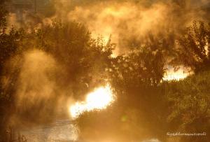 朝霧立つ黒目川