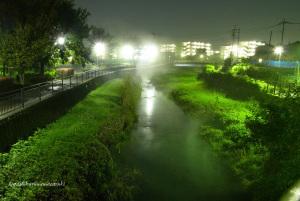 夜霧立つ黒目川