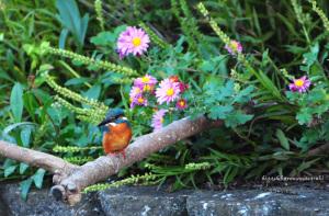 菊とカワセミ