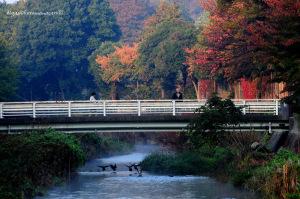 紅葉が始まった黒目川