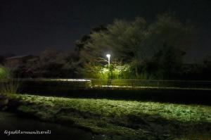 雪を被った黒目川