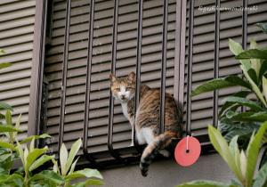 ムクドリのヒナを狙う猫