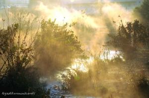 立ちのぼる朝霧