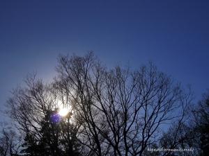 木立に落ちる太陽