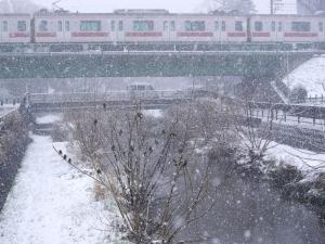 雪のムクドリ