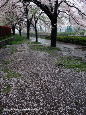 雨に散る桜