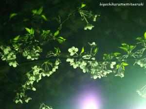 街路灯に浮かぶ桜