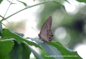 雑木林の虫たち