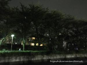 夜のコサギ