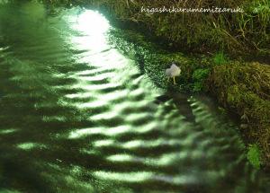 夜霧のゴイサギ