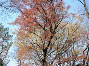 雑木林に春の色