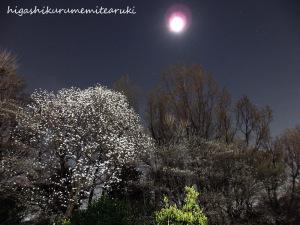 月に浮かぶ白い花