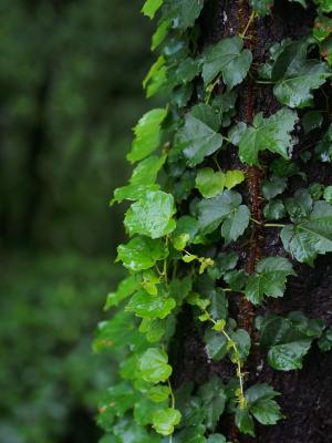 雨の雑木林
