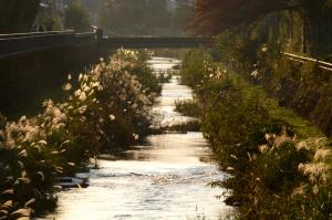 黒目川の秋