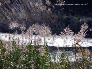 冬の川面とコサギ