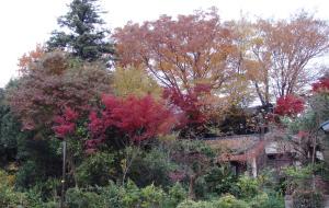 ご近所の紅葉