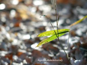 葉っぱと光