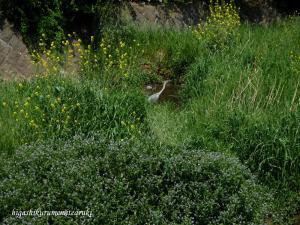 アオサギのいる風景