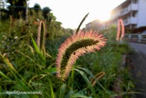 夕日に染まった植物