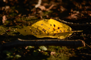 夕日と落ち葉