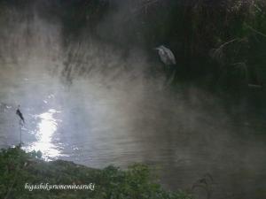 夜霧のアオサギ