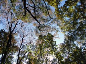 晩秋の雑木林