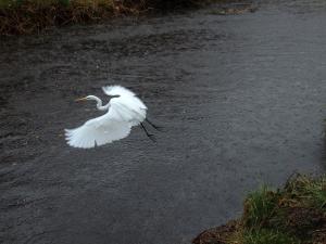 雨の中の鳥たち
