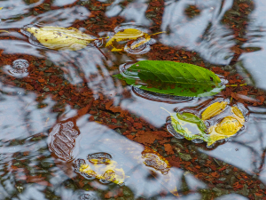 水たまりの落ち葉